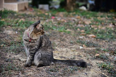 Cat staying on ground and seeing. Cat staying on ground and looking for something Stock Photo