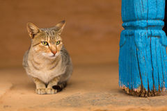 Cat staying Stock Images