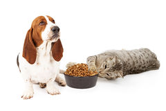 Cat Stealing Dog Food royalty-vrije stock foto's