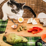 Cat stealing an egg from the table Royalty Free Stock Photo