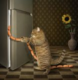 Cat steals sausages 3 royalty free stock image