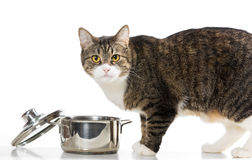 Cat steals food from the pot Stock Photos