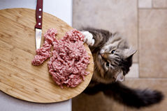 Cat steals forcemeat Stock Photos