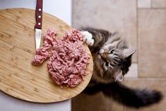 Cat Steals Forcemeat Stock Photos