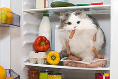 Cat steals sausage from the refrigerator.  royalty free stock images