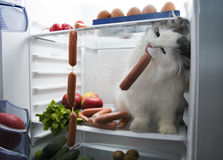 Cat steals sausage from the refrigerator Stock Photos