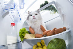 Cat steals sausage from the refrigerator Stock Images