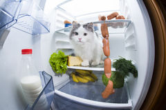 Cat steals sausage from the refrigerator. Royalty Free Stock Image