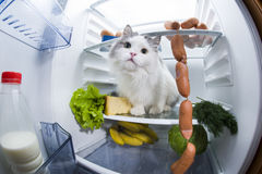 Cat steals sausage from the refrigerator Stock Photo