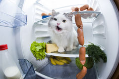 Cat steals sausage from the refrigerator Stock Photography