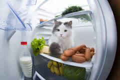 Cat steals sausage from the refrigerator. Stock Images