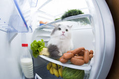 Cat steals sausage from the refrigerator Royalty Free Stock Images