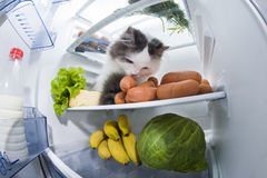 Cat steals sausage from the refrigerator Royalty Free Stock Photography