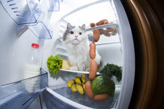 Cat steals sausage from the refrigerator Royalty Free Stock Image