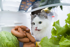 Cat steals sausage from the refrigerator Royalty Free Stock Photos