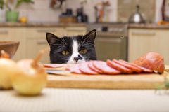 Cat steals sausage Stock Photography