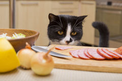 Cat steals sausage Stock Images