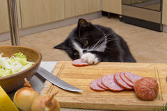 Cat steals sausage Stock Photos
