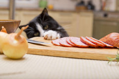 Cat steals sausage Royalty Free Stock Photography