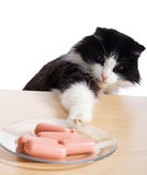 Cat steals sausages Stock Images