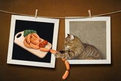 Cat steals sausages 2 stock photos