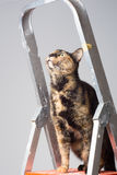 Cat and stepladder Stock Image