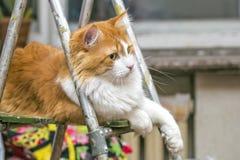 Cat on stepladder Stock Photo