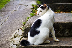 Cat on steps Stock Images