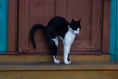 Cat on the steps Stock Photography