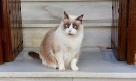 Cat on Steps Stock Photo