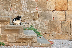 Cat on the steps of the house Stock Photos
