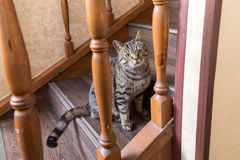 Cat on the steps Royalty Free Stock Image