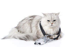 Cat with a stethoscope on his neck.  on white background Stock Image