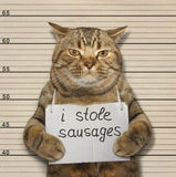 Cat stole sausages Stock Image