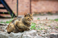 Cat on the stone Royalty Free Stock Photography