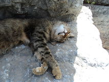 A cat on the stone block. Royalty Free Stock Image