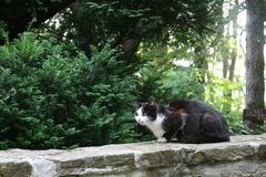Cat On The Stone Fence Stockbild