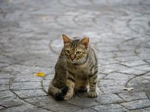Cat. A cat on a stone path with an intent expression royalty free stock photos