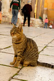 Cat on a stone pavement Royalty Free Stock Images