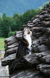 Cat on the stone roof Stock Image