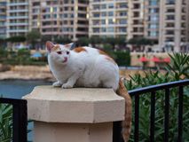 Cat on stone in Sliema Royalty Free Stock Photo