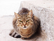 Cat at the stone stair  (1). Brown tabby cat Stock Images