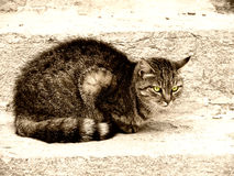 Cat (31). Cat on a stone step Royalty Free Stock Photography