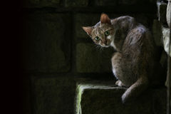 Cat on stone step. Cat looking back as it sits on a stone step with large black shadows in background Stock Image