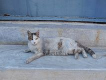 Cat on Stone Steps Stock Image
