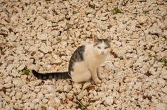 Cat On Stoney Ground noire et blanche photographie stock libre de droits
