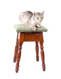 Cat on a stool Royalty Free Stock Photos
