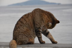 cat stopped cleaning herself in front of the island Stock Photography