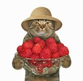 Cat with a bowl of raspberries. The cat in a straw hat holds a glass bowl of ripe raspberries. White background Stock Photography