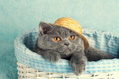 Cat in a straw hat sitting in a basket Stock Photo